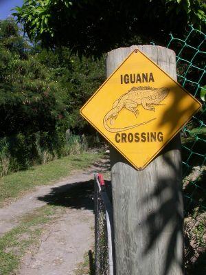 """iguana sign"" montserrat"