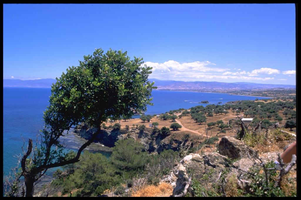 cyprus tree water